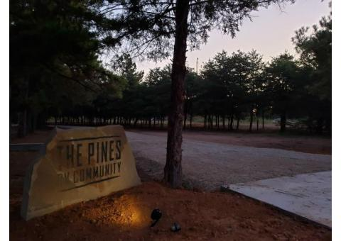 Welcome to the Pines